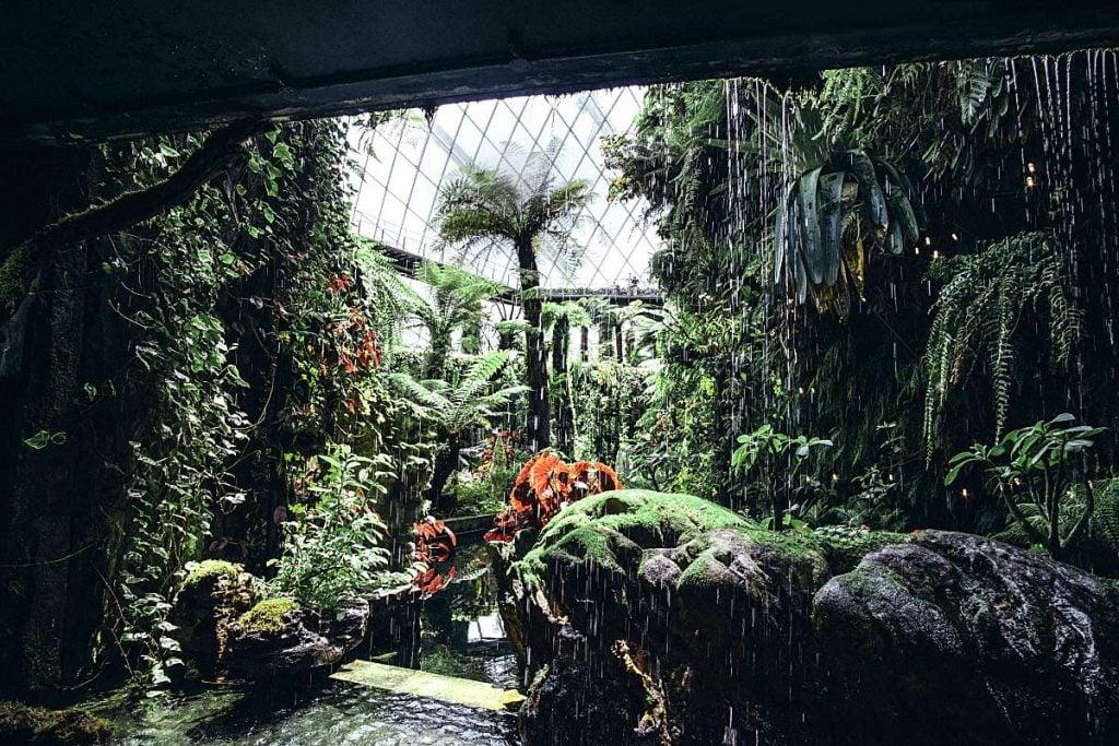 Rain forest indore