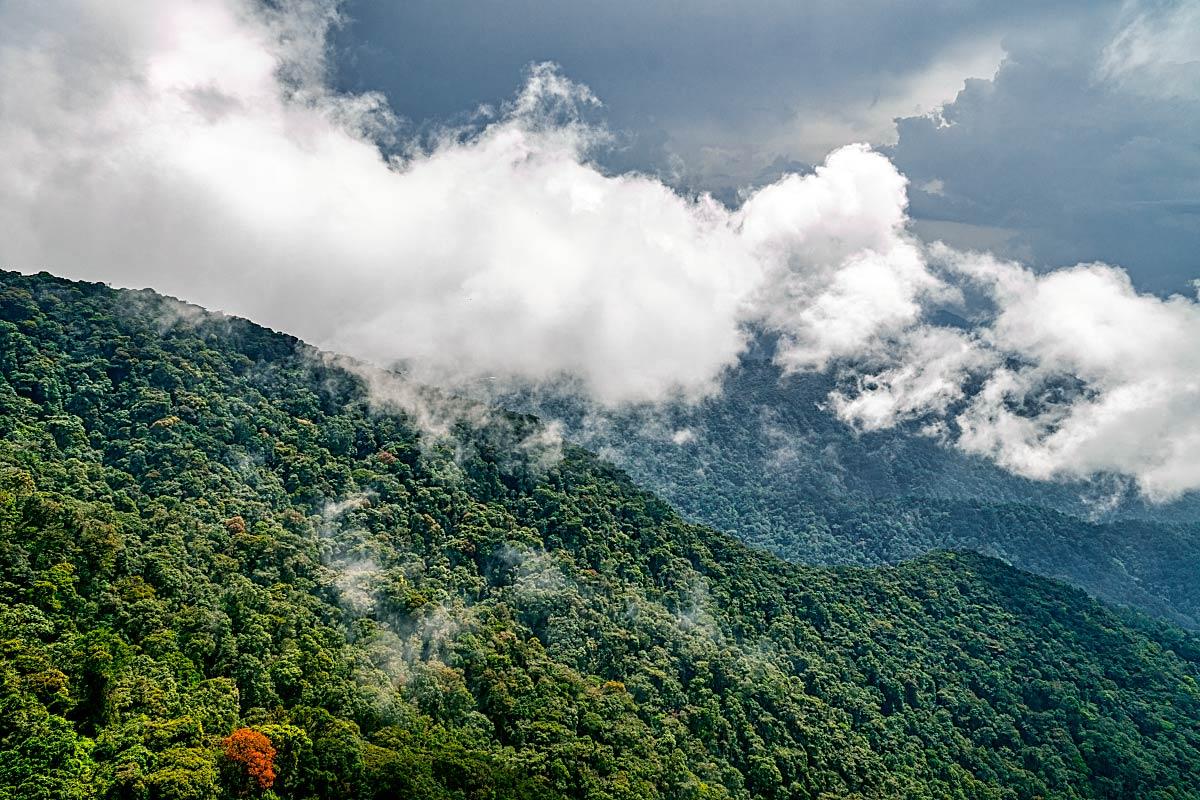 jungle canopy