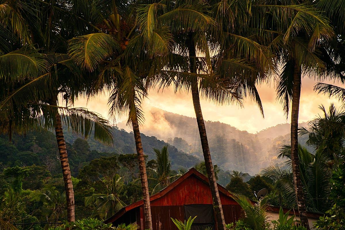 malaysian rain orest