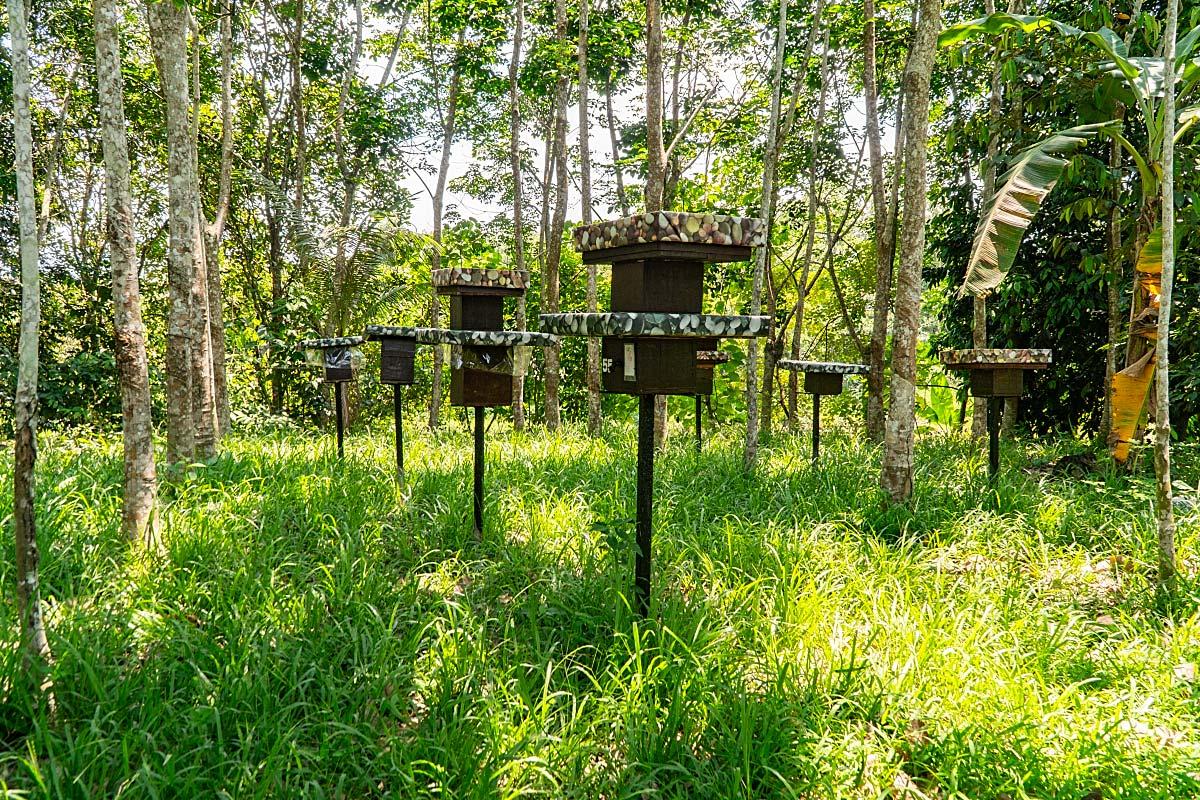 Stingless bee farm