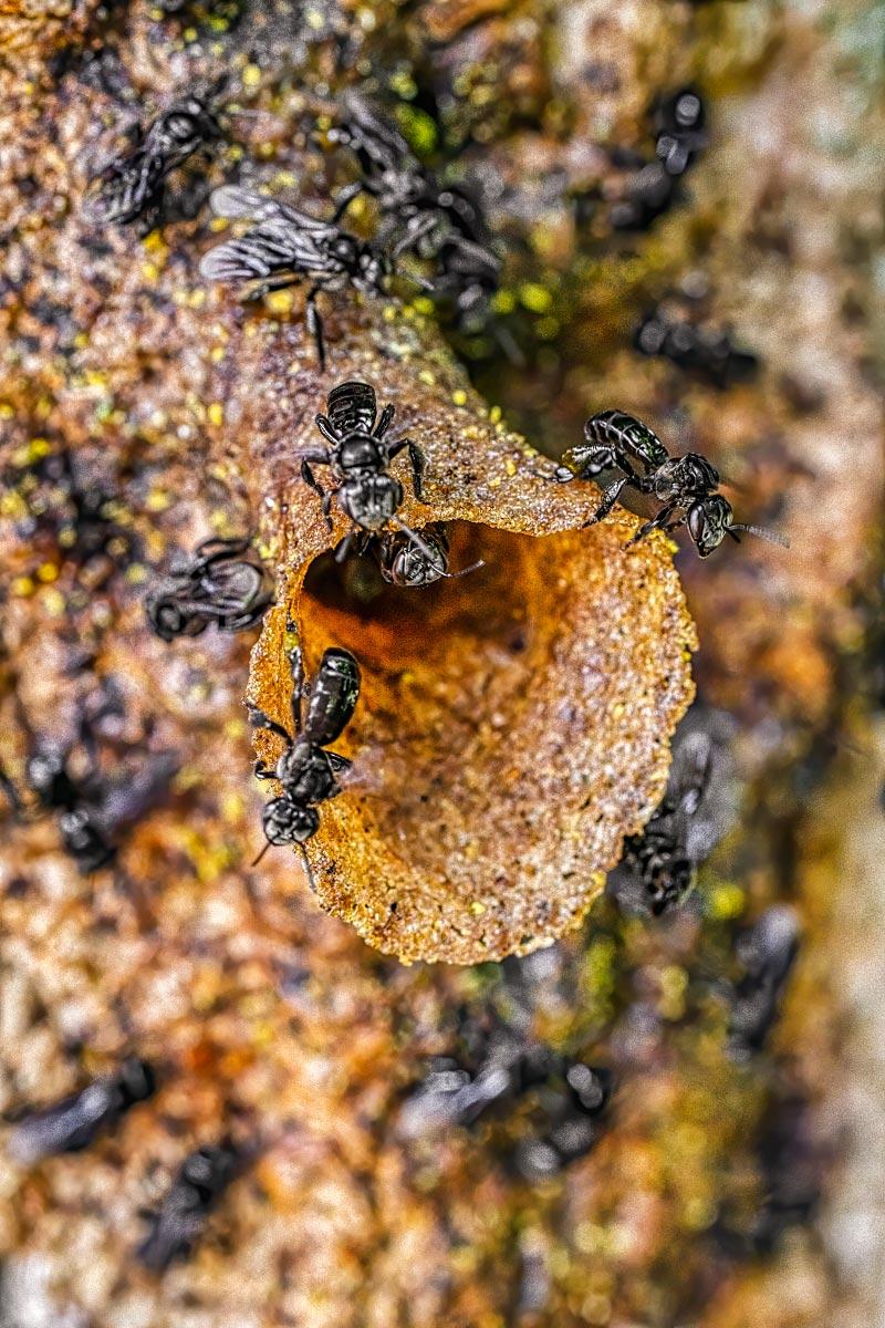 Hive entrance