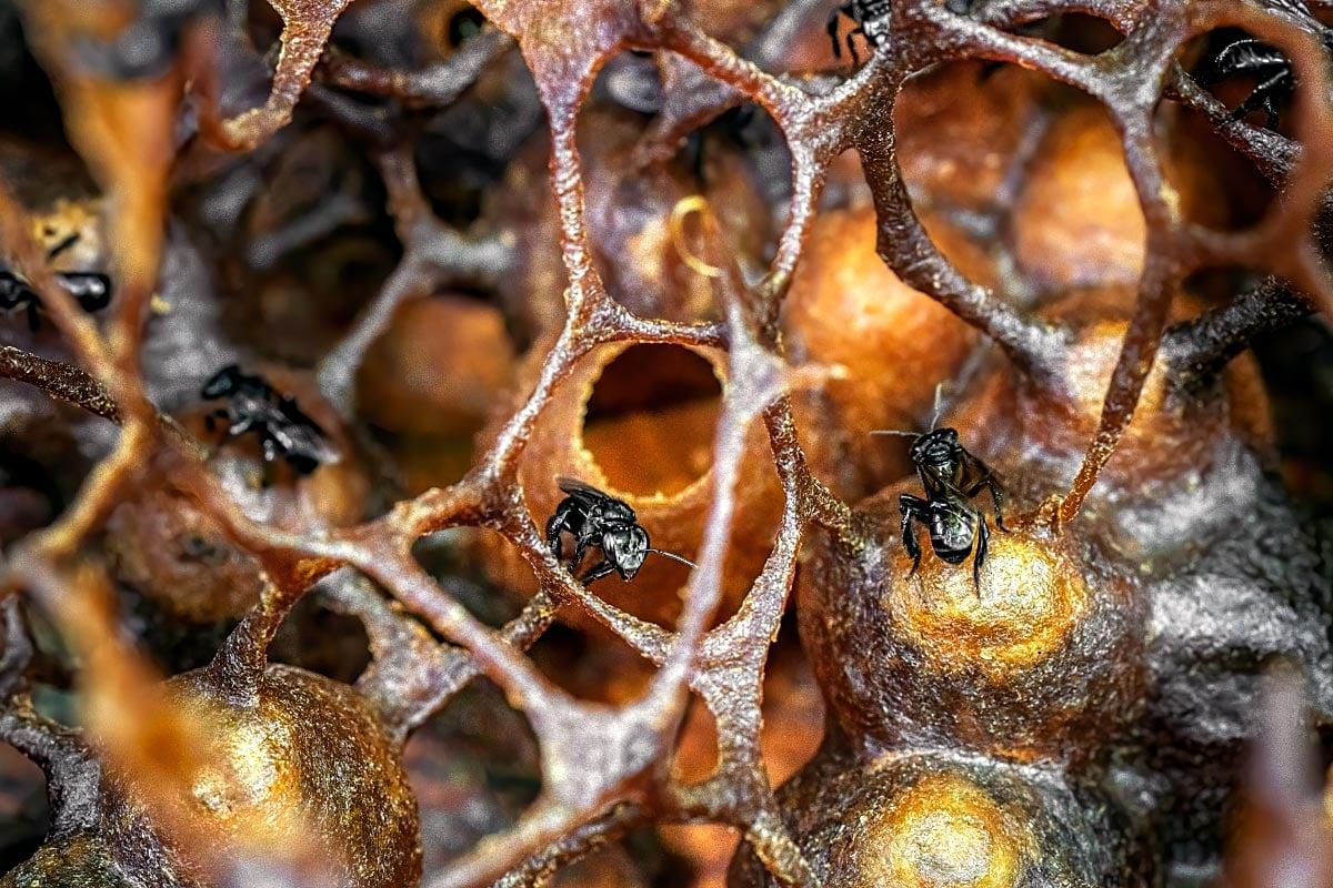 Stingless bee hive