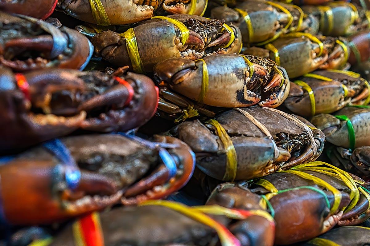 tied crabs