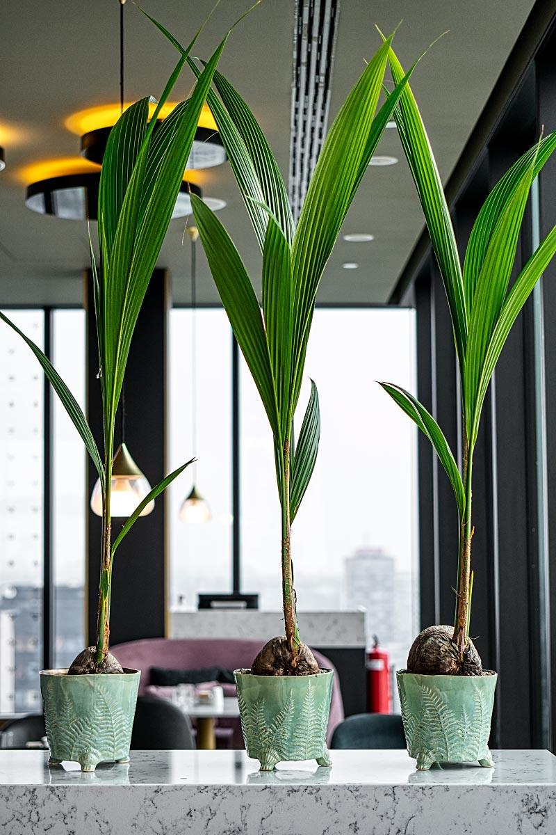 greenery in hotel