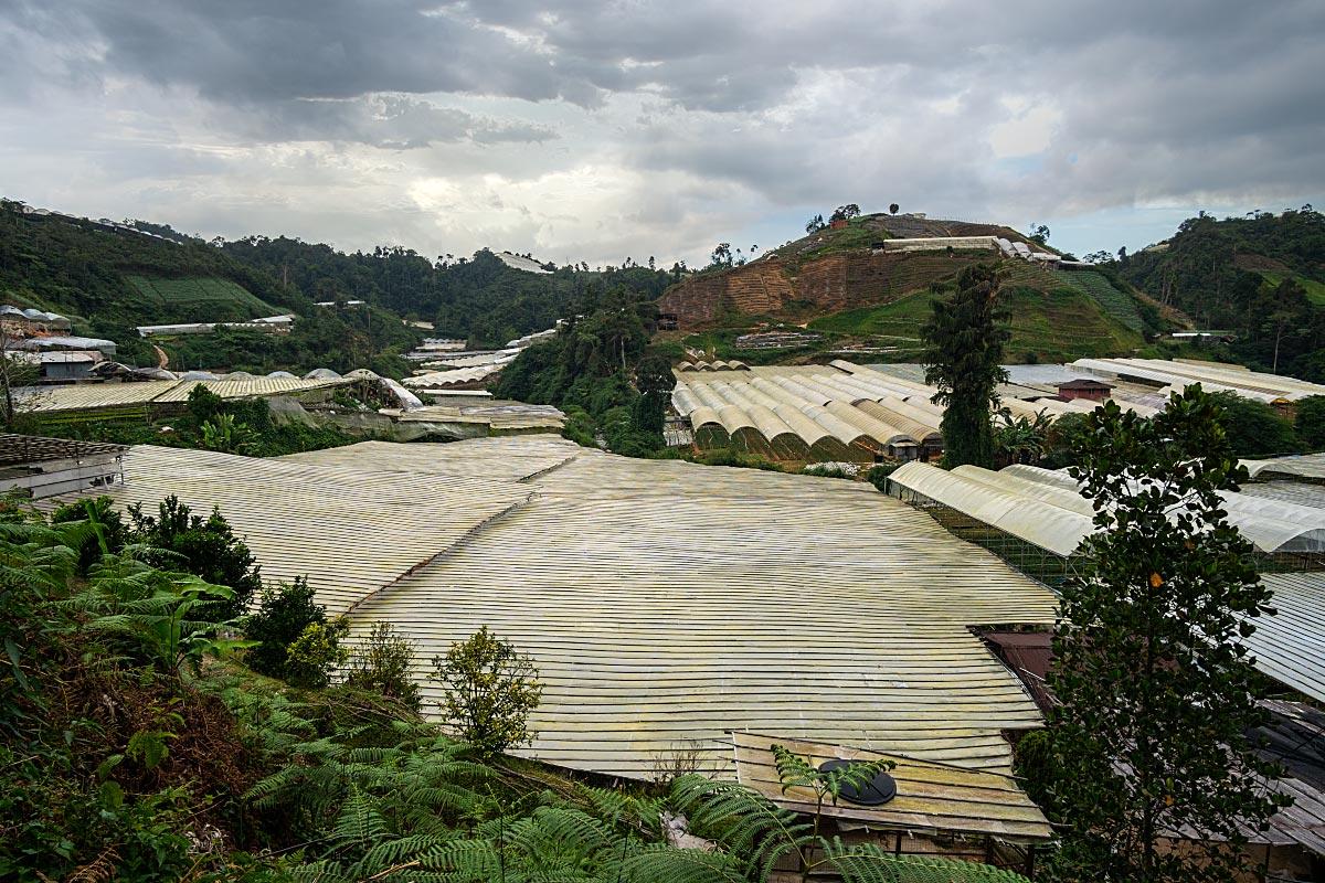 cameron highlands plantations